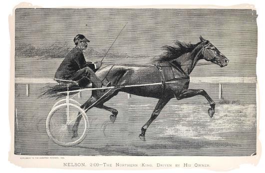 The Balch National Stallion Race