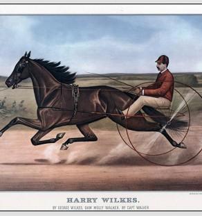 Harry-Wilkes