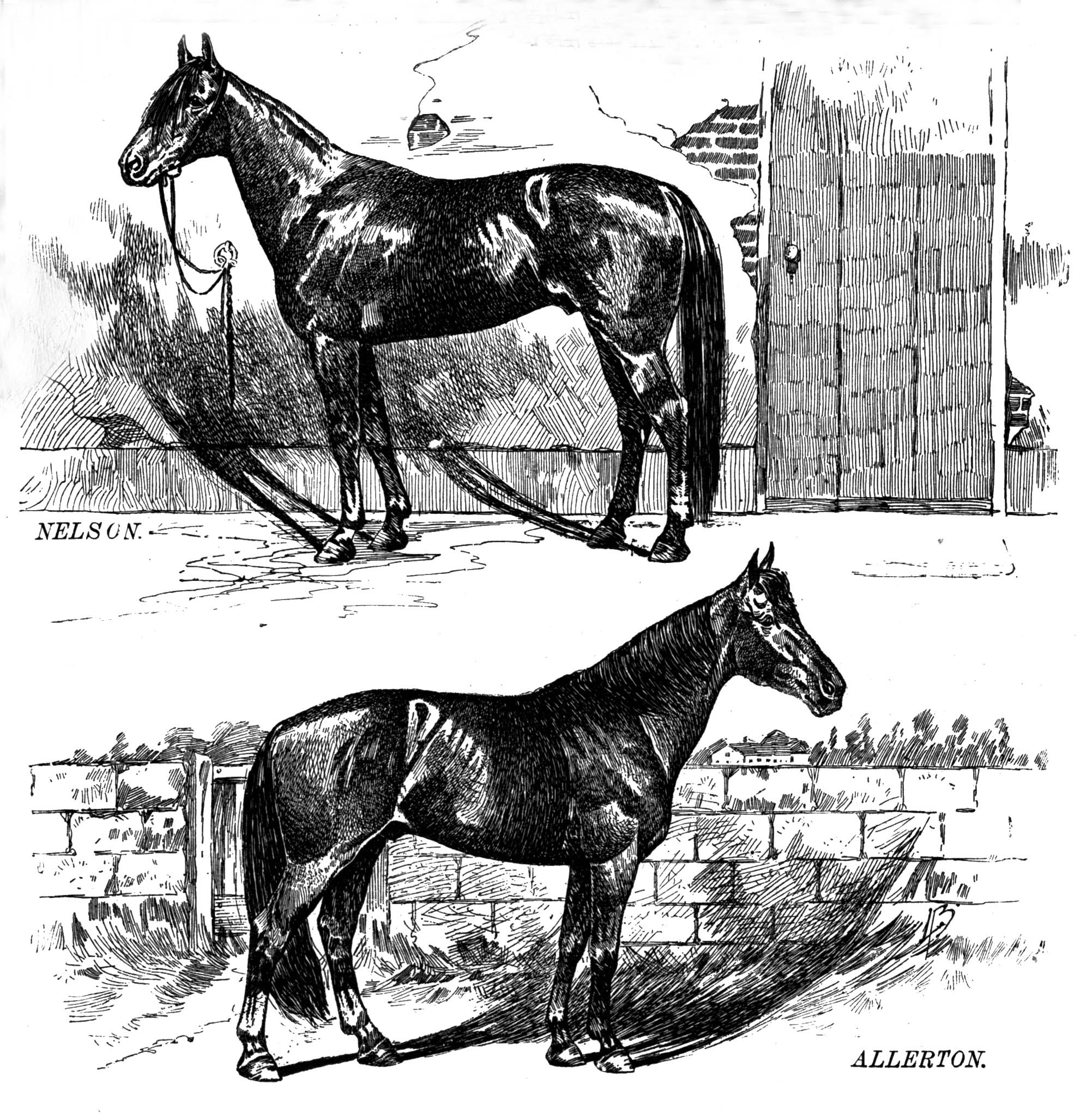 The Star Standardbreds of the 1890's Including Nelson 4209